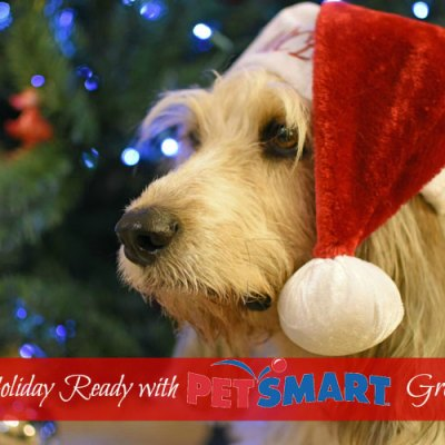 Get Your Dog Holiday Ready With #PetSmartGrooming
