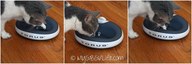 My GBGV Life cat bro Bert enjoys the Torus bowl