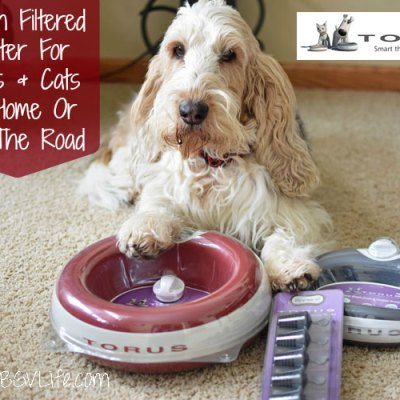 Fresh Water For Dogs And Cats At Home Or On The Road