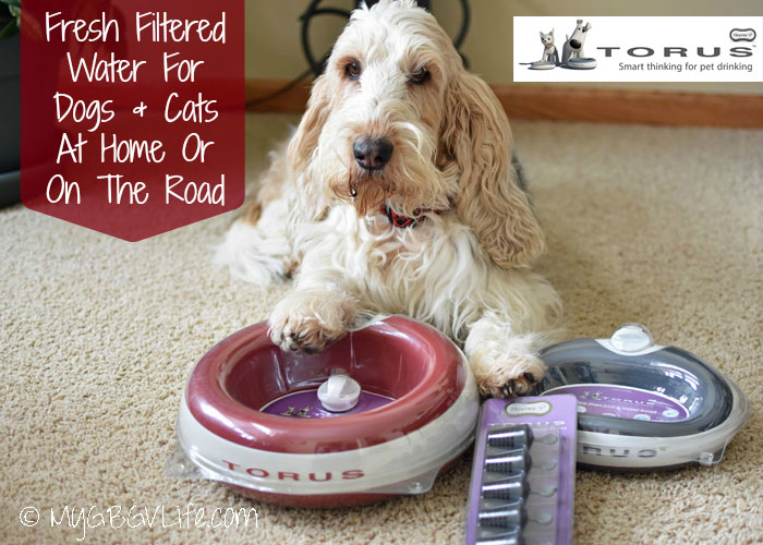 My GBGV Life Fresh Water for Cats and Dogs with HeyRex Torus Bowls