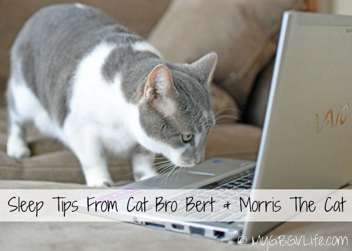 My GBGV LIfe Sleep Tips from cat bro Bert and Morris the Cat
