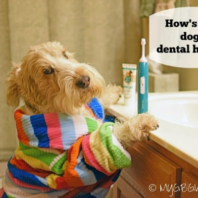 Does Your Dog Have Healthy Teeth