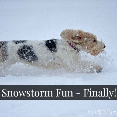 Snowstorms And Dogs