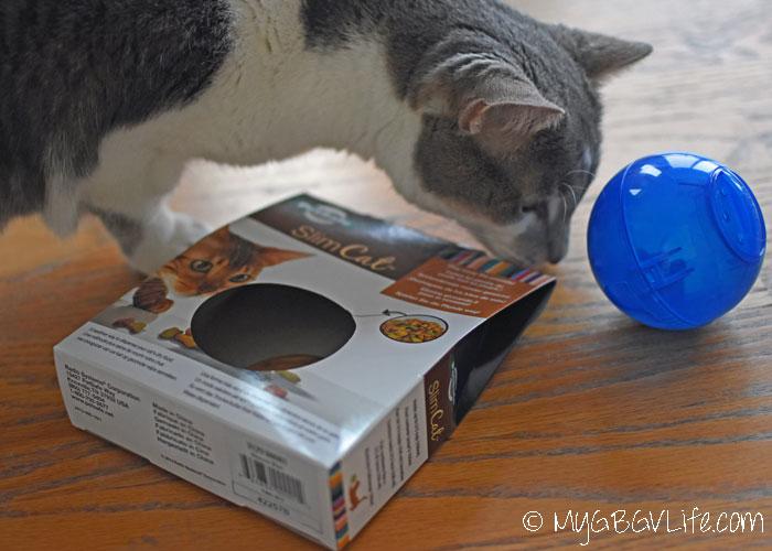My GBGV Life Cat Bro Bert with slimcat from PetSafe