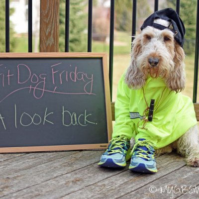 A Look Back At FitDog Friday
