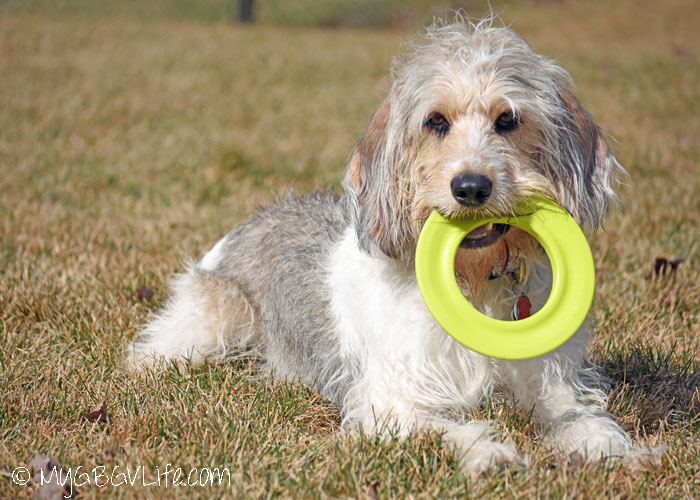 My GBGV Life Fun Classic Lawn Games For Dogs