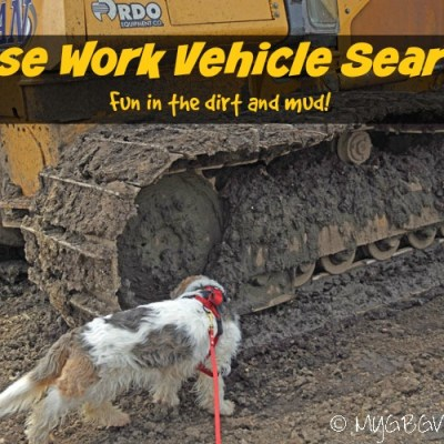The Dirty Work Of Nose Work