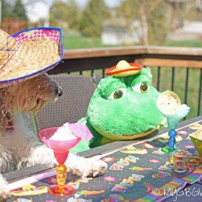 Cinco de Mayo With Bailie And Señor Frog