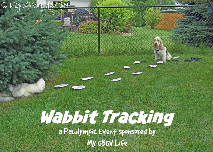 Wabbit Tracking - Join This Pawlympic Event Hosted By My GBGV Life