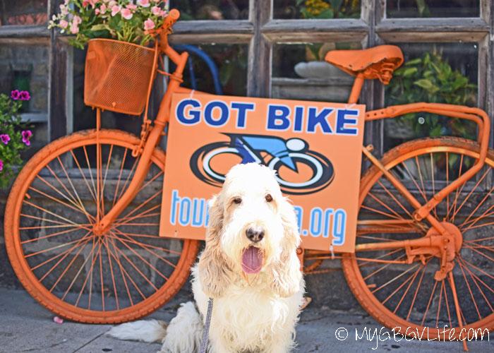 My GBGV Life Dog Friendly Excelsior On Lake Minnetonka