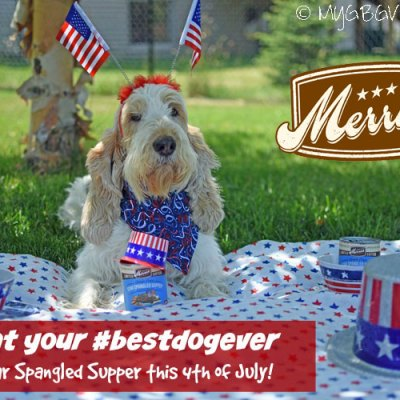 4th Of July For Your #BestDogEver
