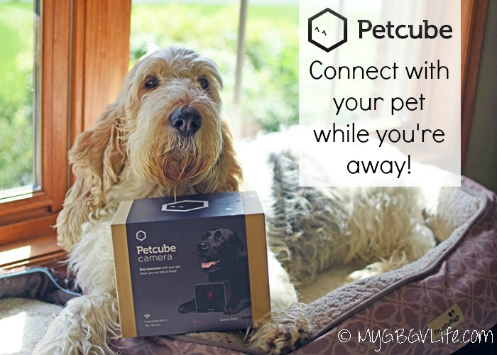 My GBGV Life Petcube - Connect With Your Pets While You Are Away