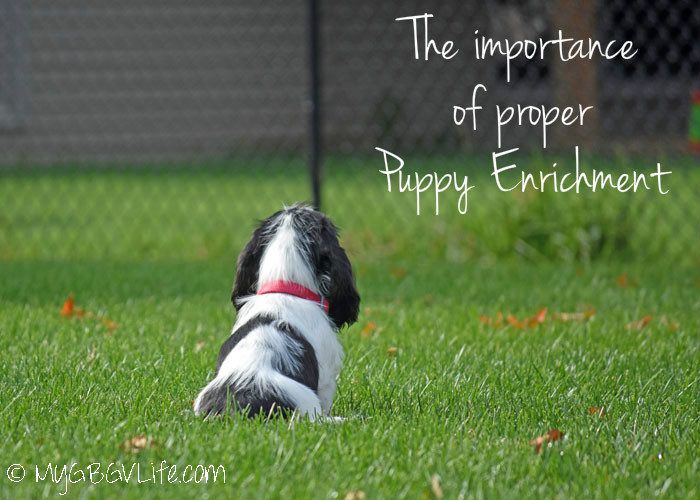 My GBGV Life The Importance Of Puppy Enrichment - Madison's First Two Weeks