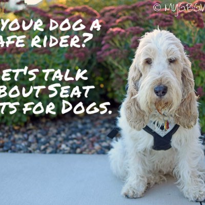 Seat Belts For Dogs – Is Your Dog A Safe Rider?