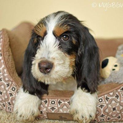 One Happy Little Puppy