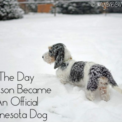 The Day Madison Became An Official Minnesota Dog