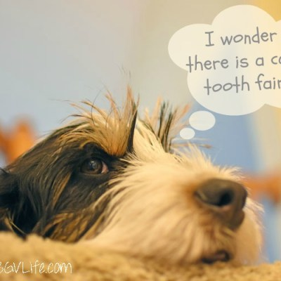 Is There A Canine Tooth Fairy? An Almost Wordless Answer!