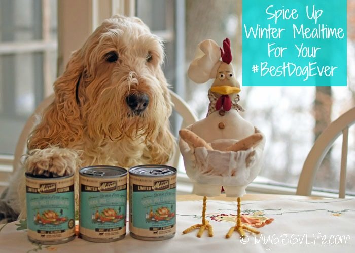 My GBGV Life Spice Up Winter Mealtime For Your #BestDogEver