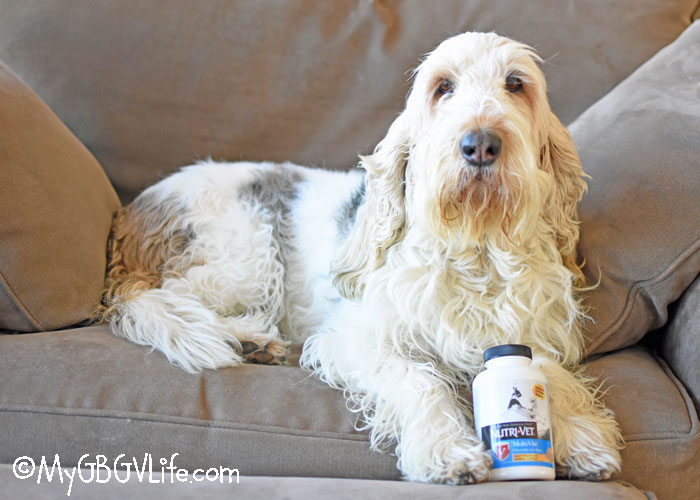 My GBGV Life Keep Your Dog Healthy And Active With #Nutri-Vet
