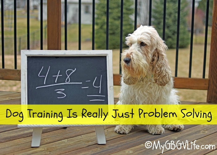 My GBGV Life Dog Training Is Really Just Problem Solving