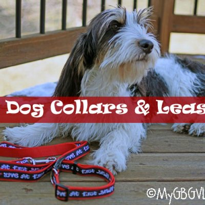 Fun Collars And Leashes For Your Dog