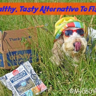 A Healthy, Tasty Alternative To Fishing #ChewyInfluencer