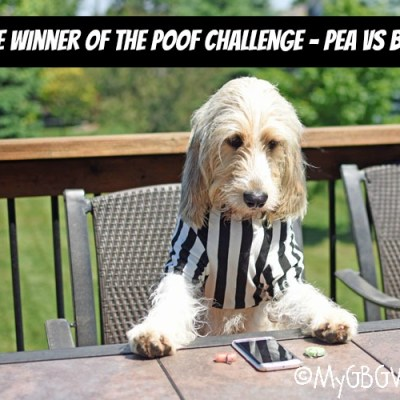 And The Winner Of The Poof Challenge – Pea vs. Bean Is…
