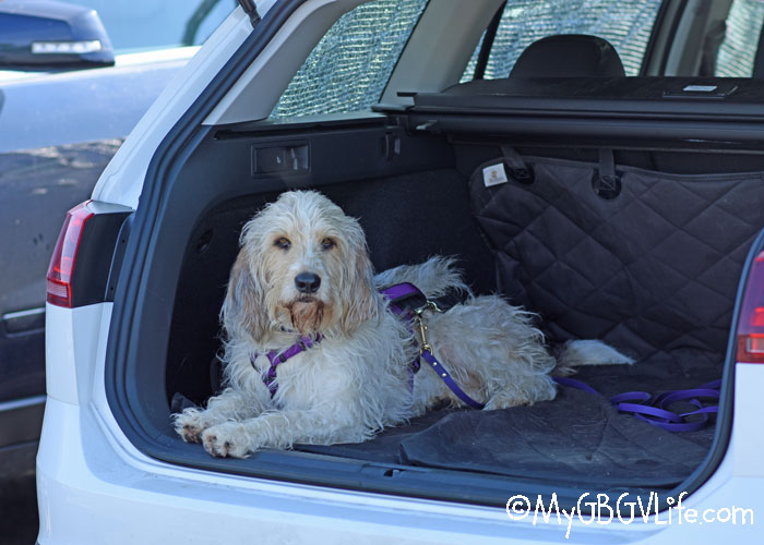 My GBGV Life How To Keep Your Dog Cool In The Car During The Summer Heat