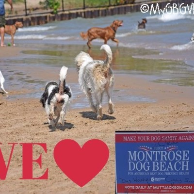 Montrose Dog Beach – The Best Part Of Our Vacation