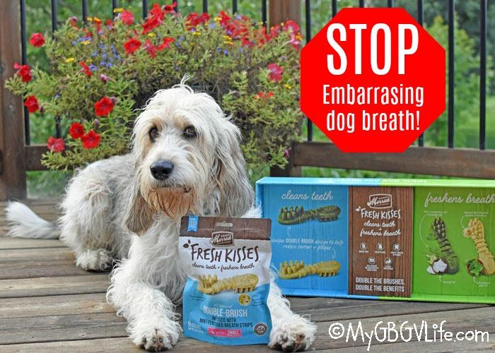 My GBGV Life Kiss Embarrassing Dog Breath Good Bye With Fresh Kisses!