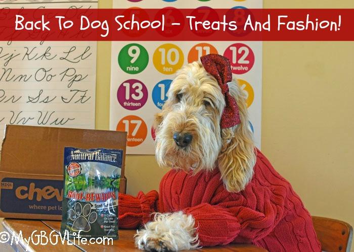 My GBGV Life Back To Dog School - Snacks And Fashion! #ChewyInfluencer