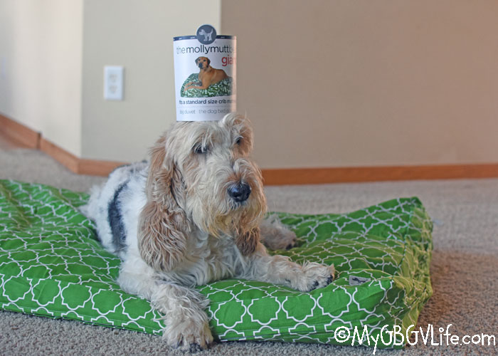 My GBGV Life Create A Dog Bed Our Of A Crib Mattress With Molly Mutt - Giveaway!