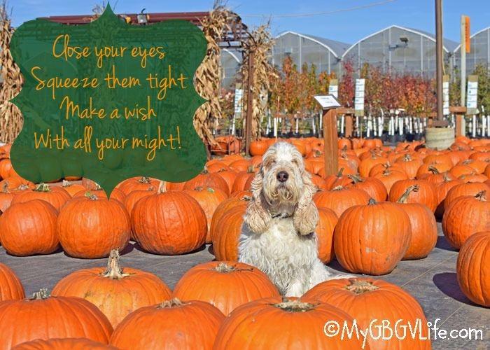 Make A Wish - I Want The Great Pumpkin!
