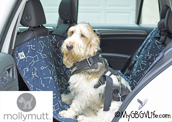 My GBGV Life Does Your Dog Travel In Style? She Sure Can With Molly Mutt!