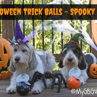 Halloween Trick Balls Provide Spooky Canine Fun!