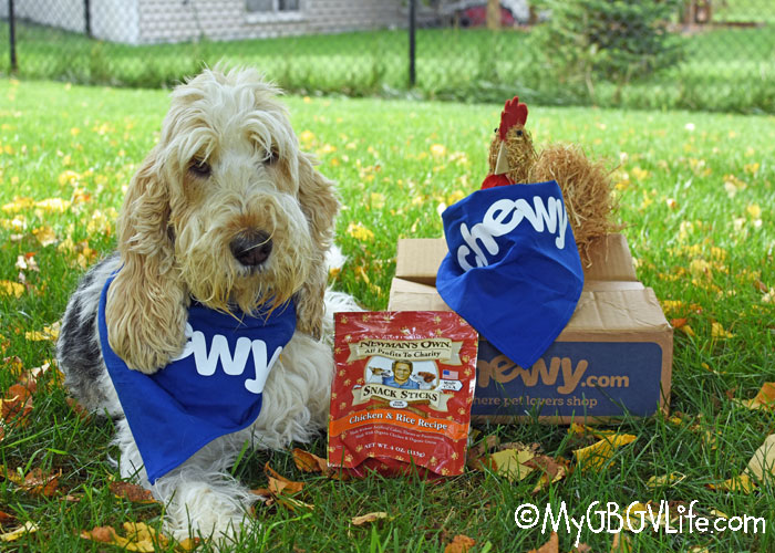 """My GBGV Life Will Your Dog """"Fall"""" For Snack Sticks? #ChewyInfluencer"""