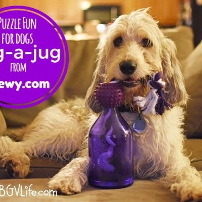 Test Your Dog's Determination With Tug-A-Jug! #ChewyInfluencer