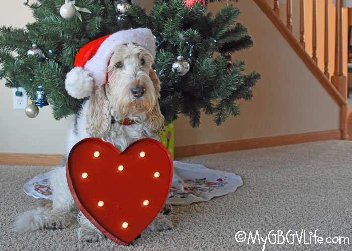 My GBGV Life Emma's 2017 Gift Suggestions For Dogs