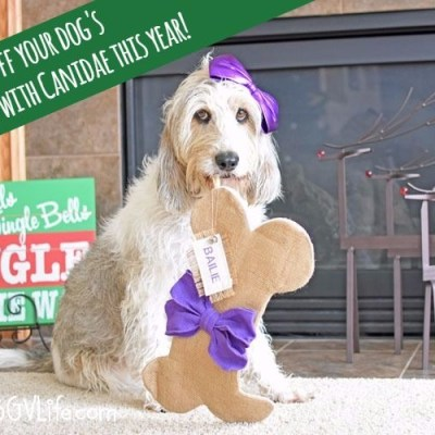 Fill Your Dog's Stocking With Canidae® This Year!