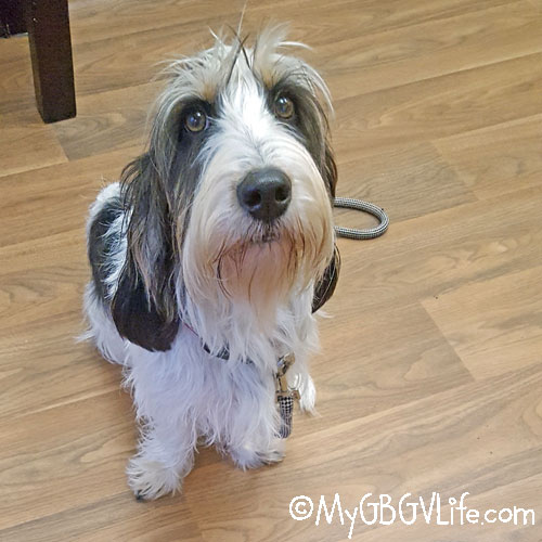 My GBGV Life My Dog Won't Eat, What Should I Do?