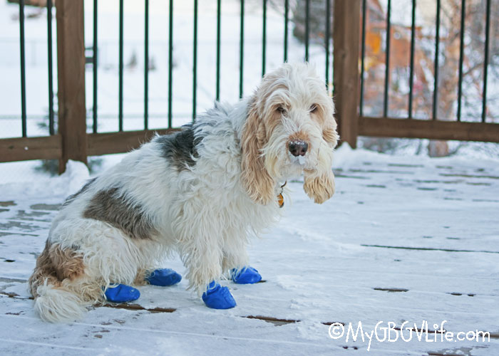 My GBGV Life How To Survive An Arctic Blast With Your Dog