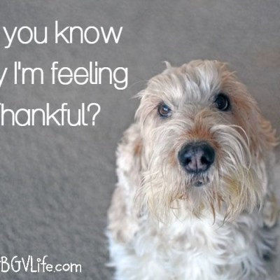 Do You Know Why I'm Thankful?