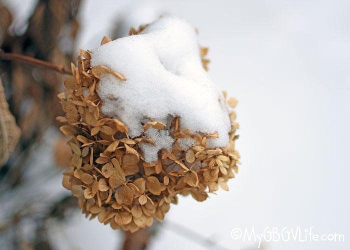 My GBGV Life Winter Flowers In Minnesota