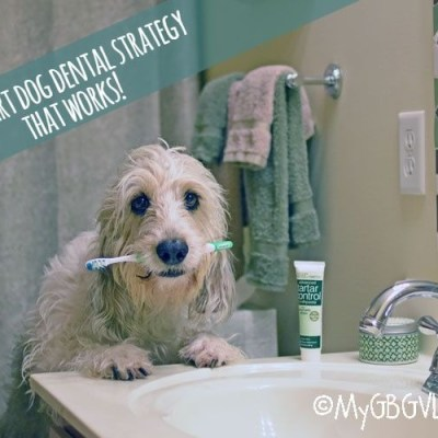 Our 3 Part Dog Dental Strategy That Works!