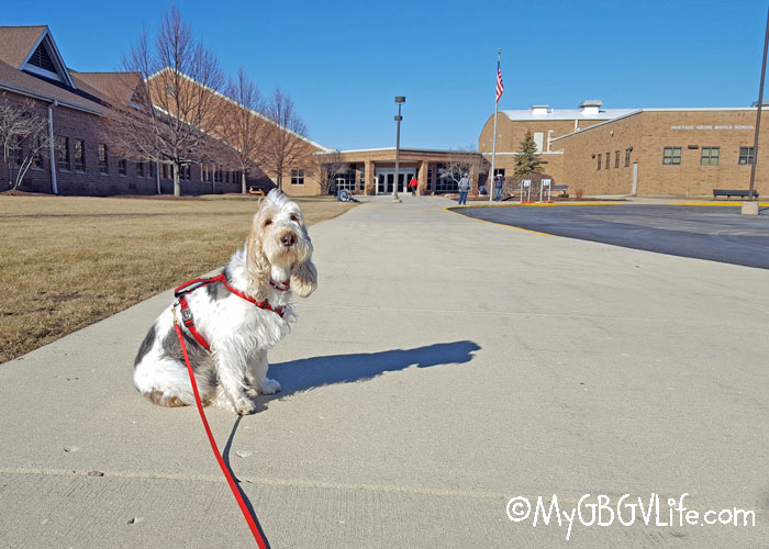 My GBGV Life Plainfield, IL - Another Nose Work Road Trip With Emma