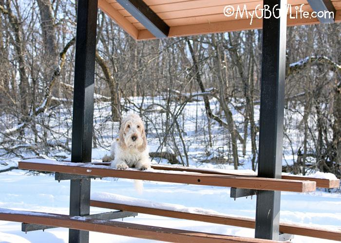 My GBGV Life A Winter Walk At Ritter Farm Park