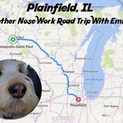 Plainfield, IL – Another Nose Work Road Trip With Emma