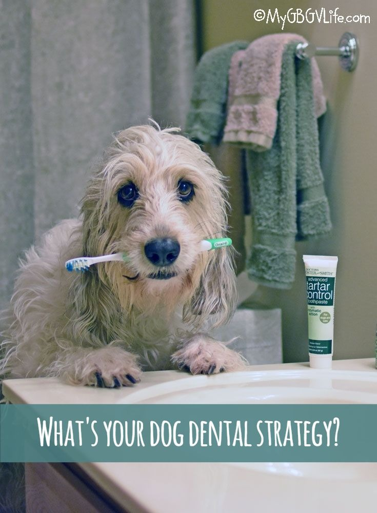 My GBGV Life Our 3 Part Dog Dental Strategy That Works!