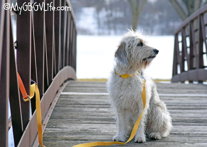 My GBGV Life Fun, Innovative Collars and Leashes for Spring #WestPawGo #Jaunts