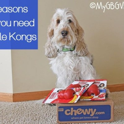 5 Reasons Why You Need Multiple Kongs #ChewyInfluencer